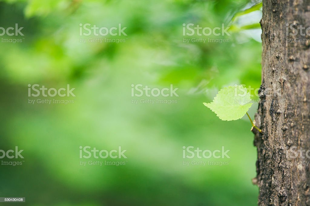 Young tree leaf stock photo