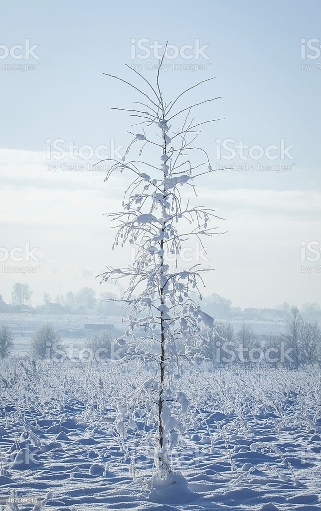 Young tree royalty-free stock photo