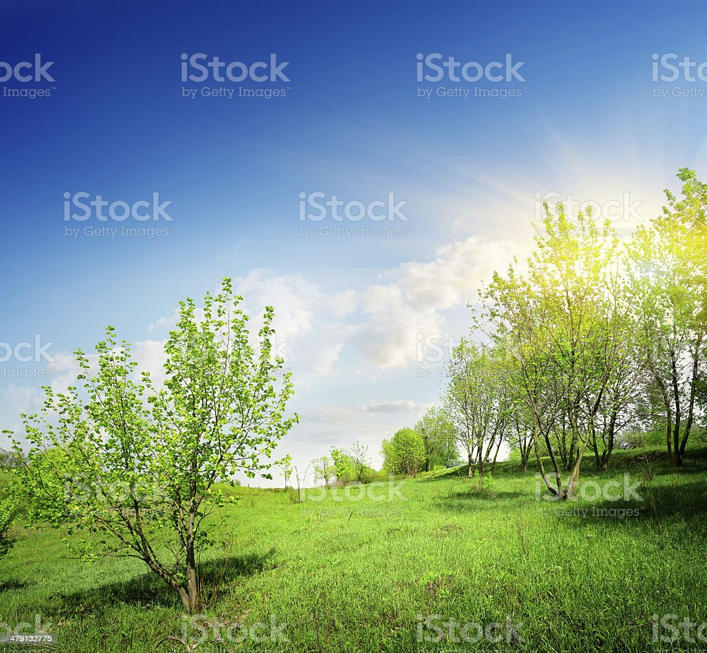 Young trees and green lawn royalty-free stock photo