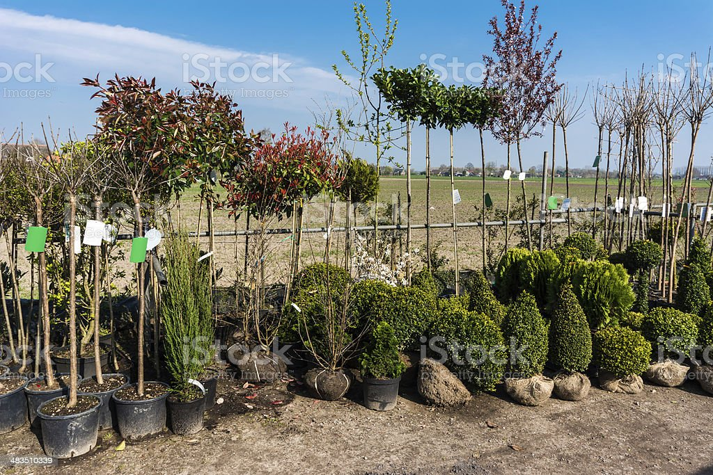 Young trees stock photo