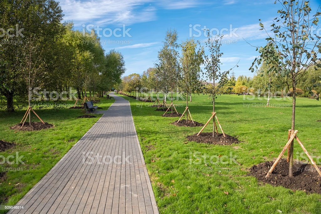 Young trees planted in the park along the paths for walking stock photo