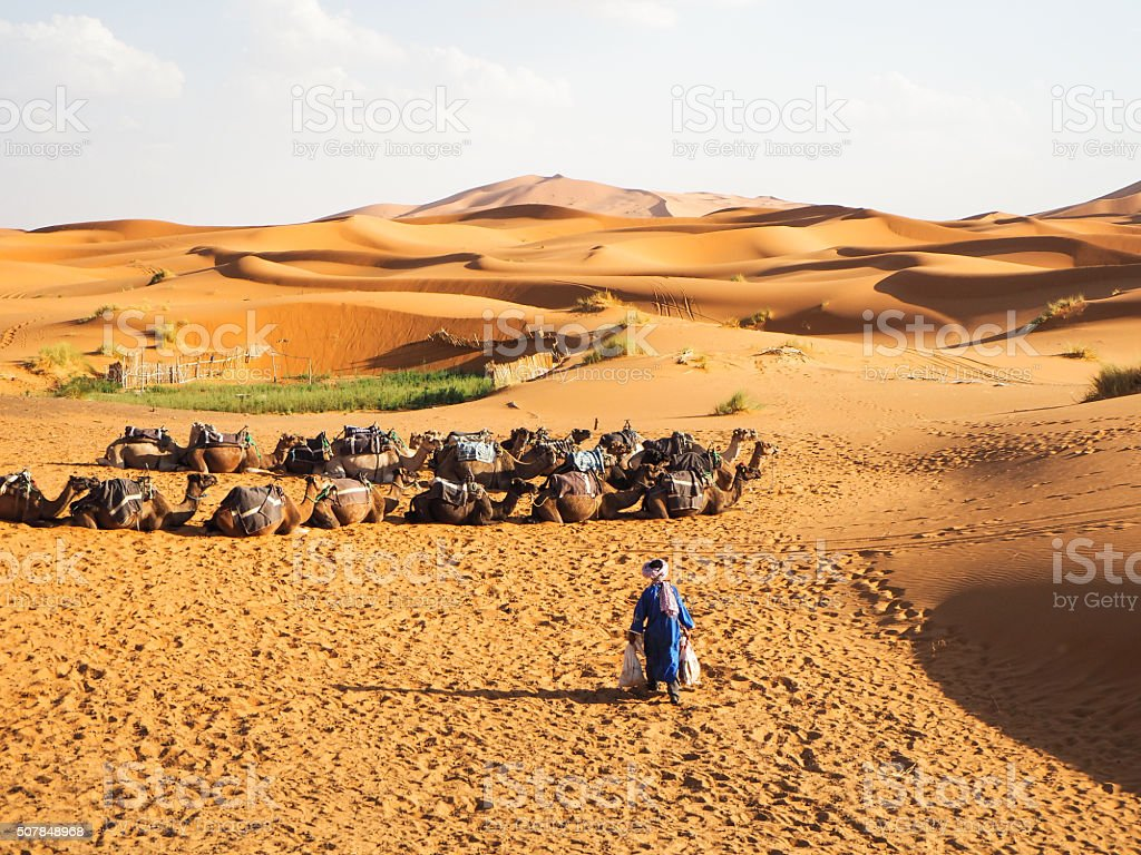 Young Tuareg with camels on Western Sahara Desert in Africa stock photo
