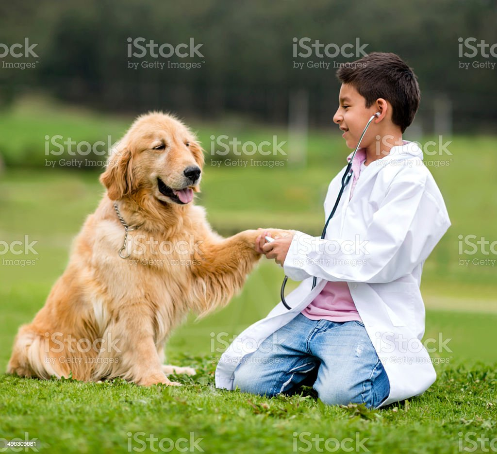 Young vet with a dog stock photo