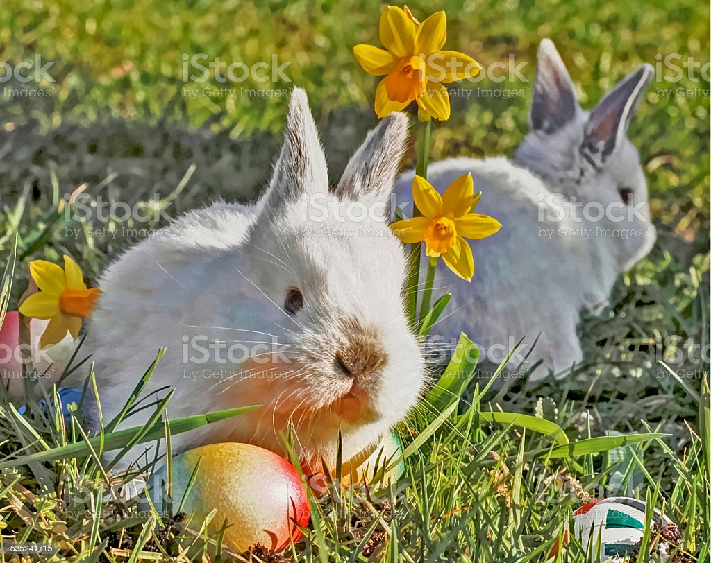 young white bunny in the grass stock photo