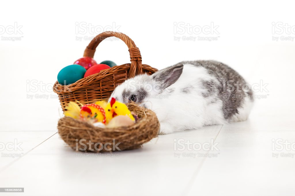 Young white rabbit with Easter basket and decoration royalty-free stock photo