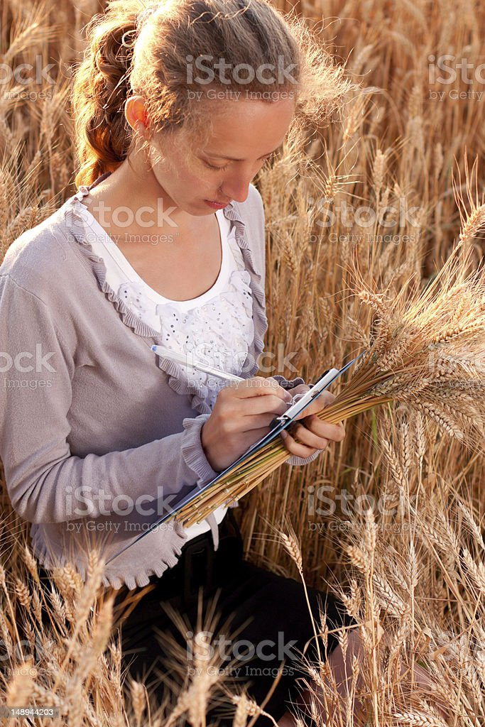 Young woman agronomist or a student analyzing wheat ears stock photo