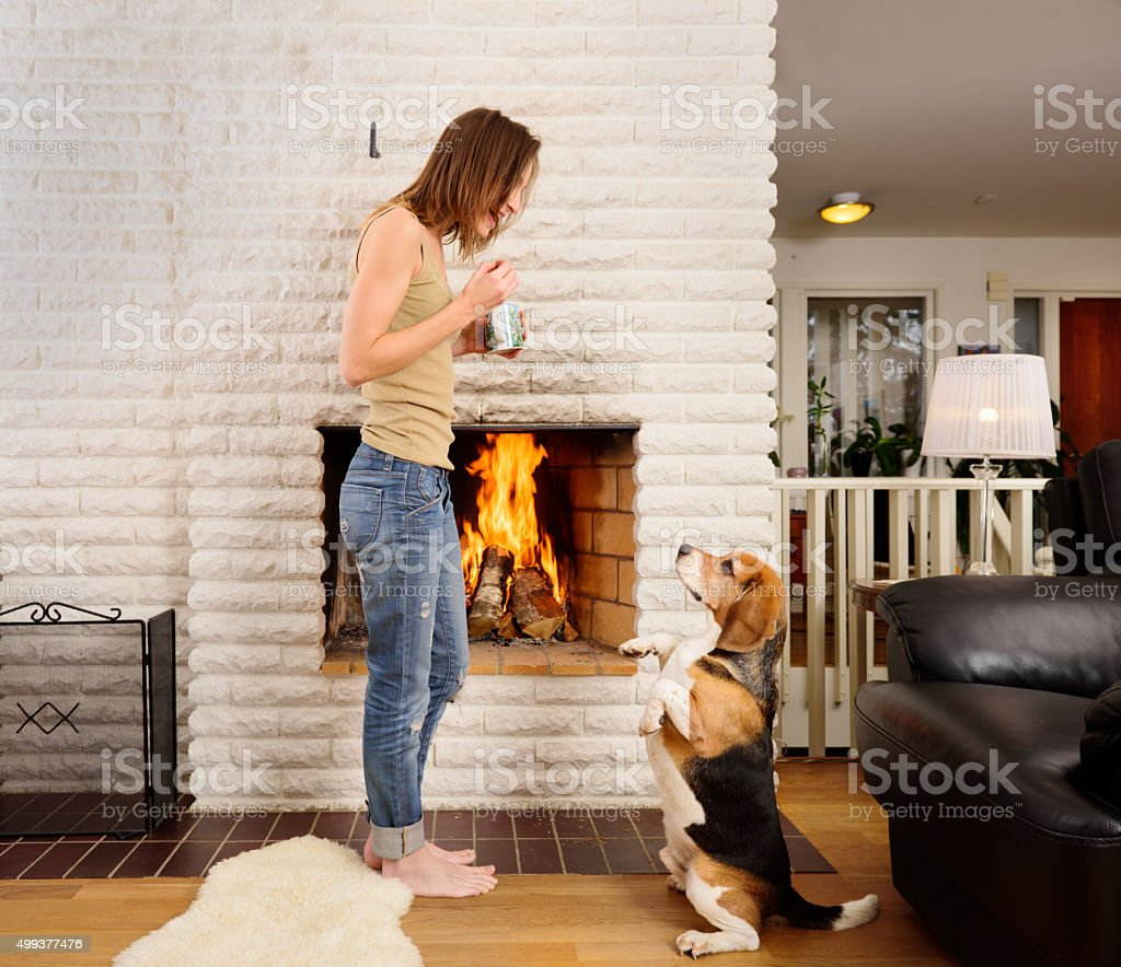 Young woman and beagle playing/training next to fireplace stock photo