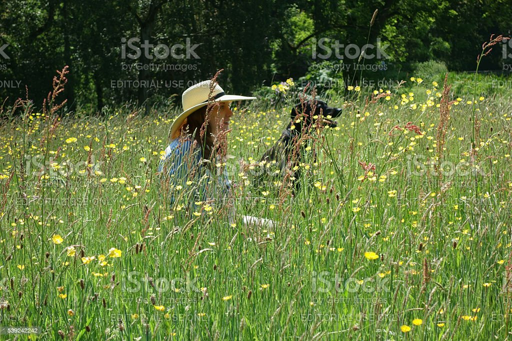 Young woman and dog sitting in the meadow stock photo