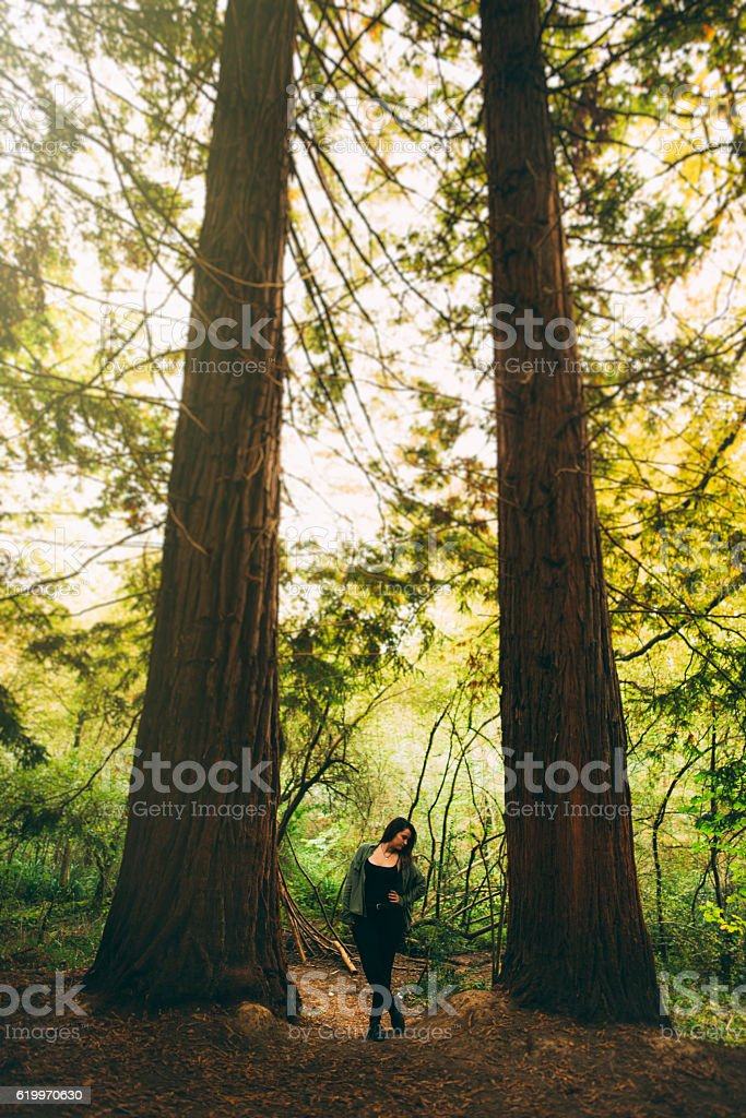Young woman at redwood forest stock photo