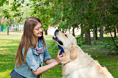 Young woman combing fur golden retriever dog on a green