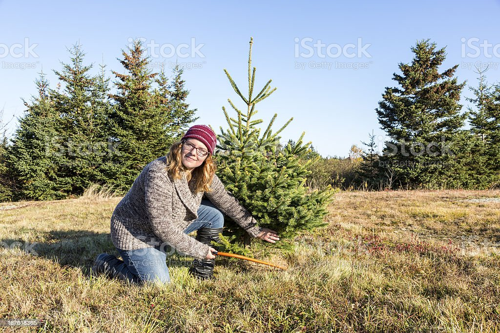 Young woman cutting a small Christmas tree in the forest stock photo