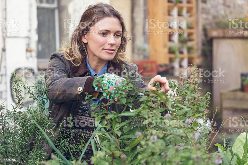 Young woman cutting herbs in an urban garden (London, UK) stock photo
