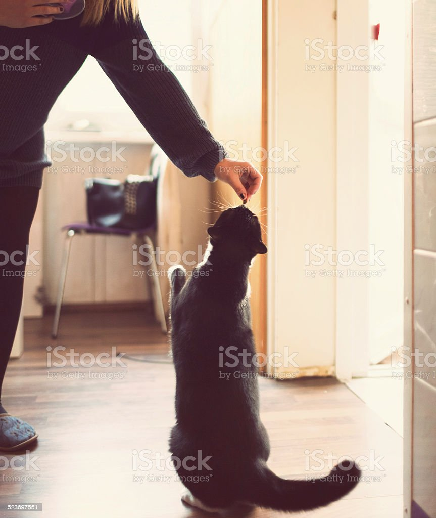 Young woman feeding the cat at home stock photo