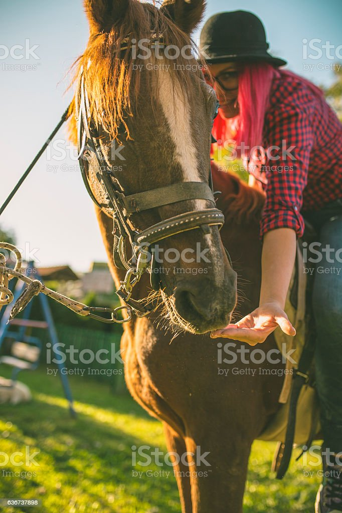 Young woman girl feeding and taking care of brown horse. stock photo