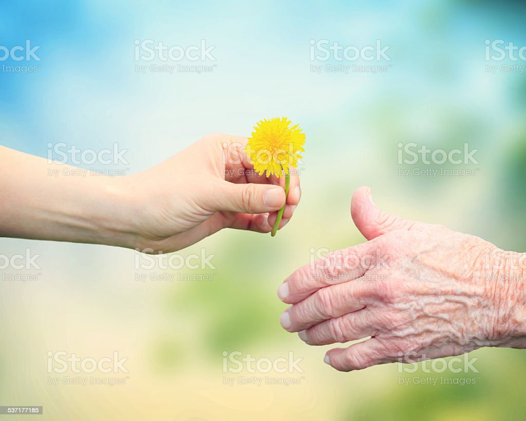 Young woman giving a dandelion to senior woman stock photo