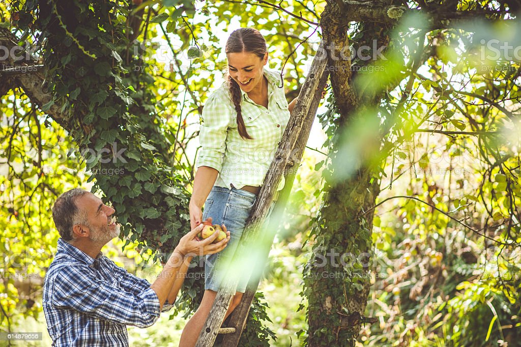 Young Woman Giving Harvested Apples to a Man stock photo