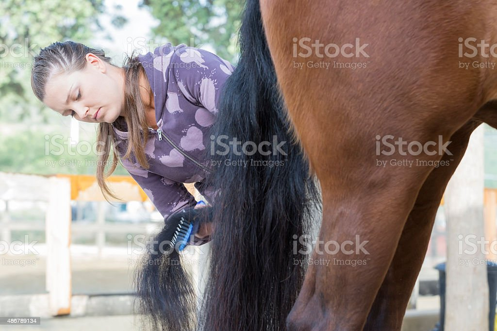 young woman grooming a horse stock photo