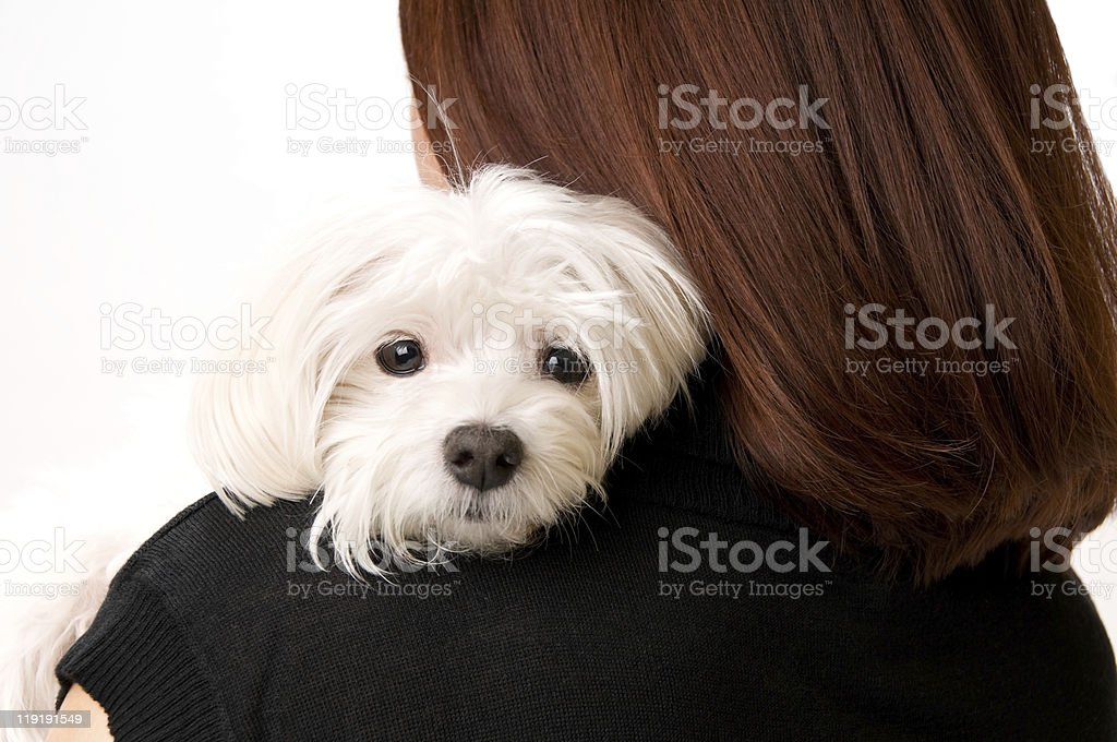 Young Woman Holding Cute Maltese Dog royalty-free stock photo