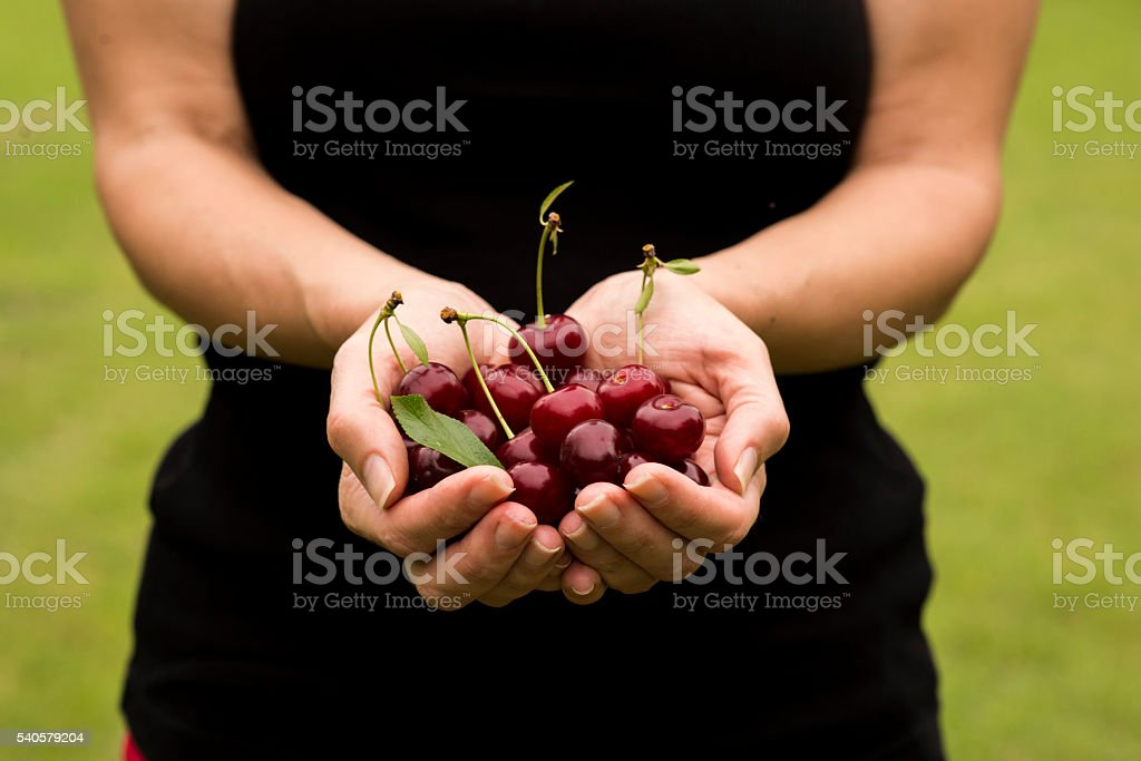 Young woman holding fresh cherries in her hands stock photo