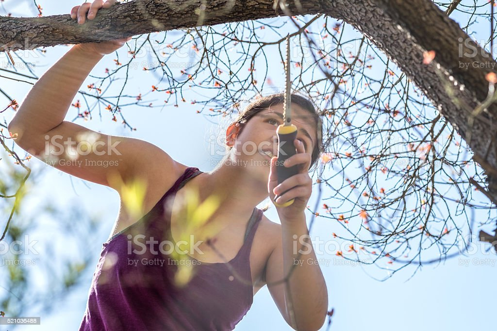 Young Woman Holding Hand Saw Examines Tree Branch Being Pruned stock photo