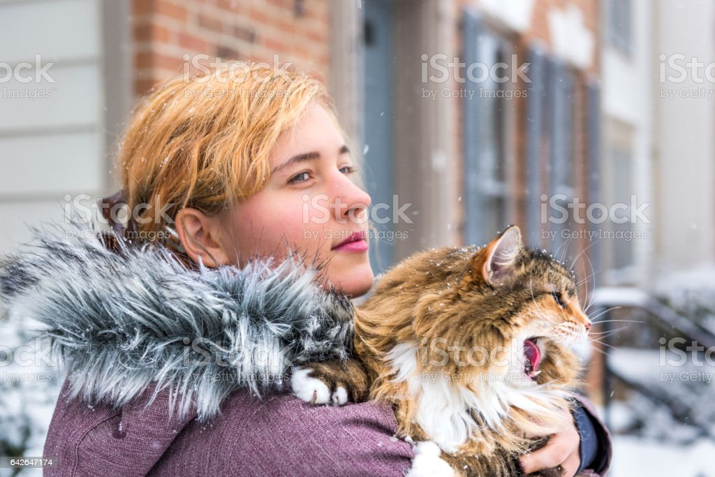 Young woman holding maine coon cat with open mouth stock photo