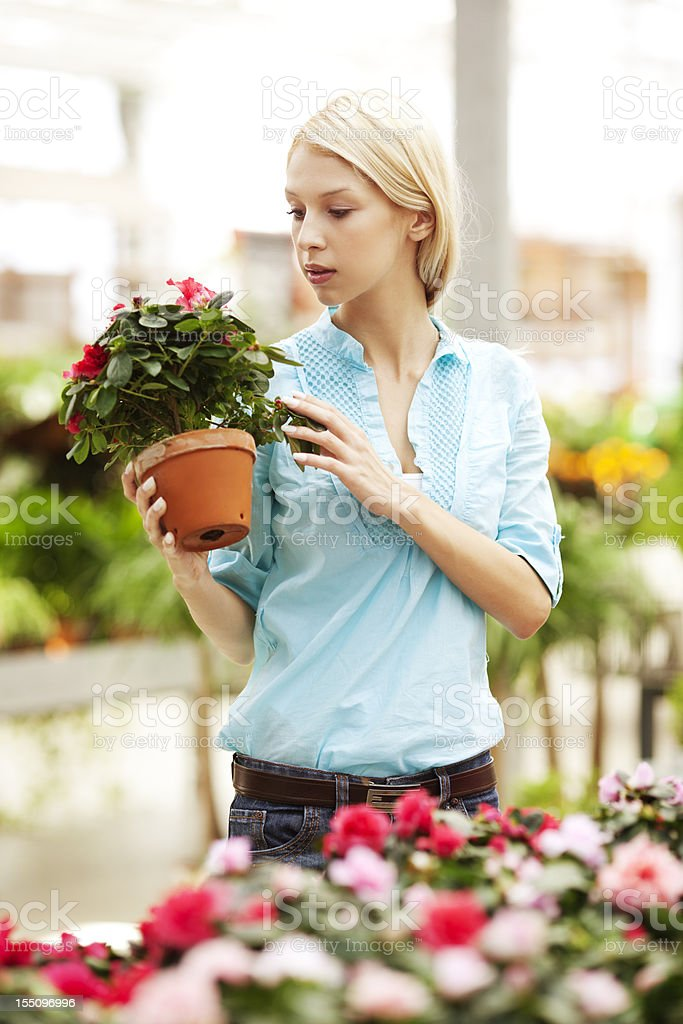 Young woman holding plant in the greenhouse royalty-free stock photo