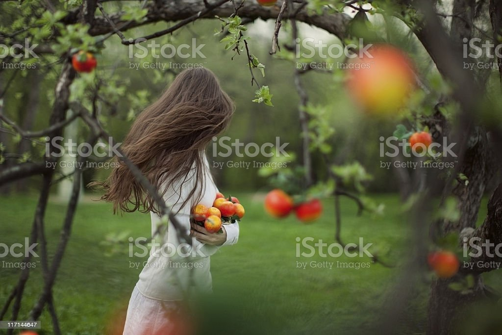 Young Woman in Apple Garden royalty-free stock photo