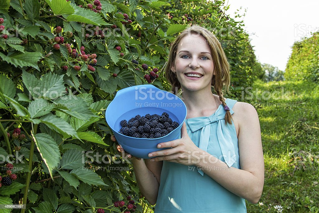 Young woman in blue dress picking blackberries royalty-free stock photo