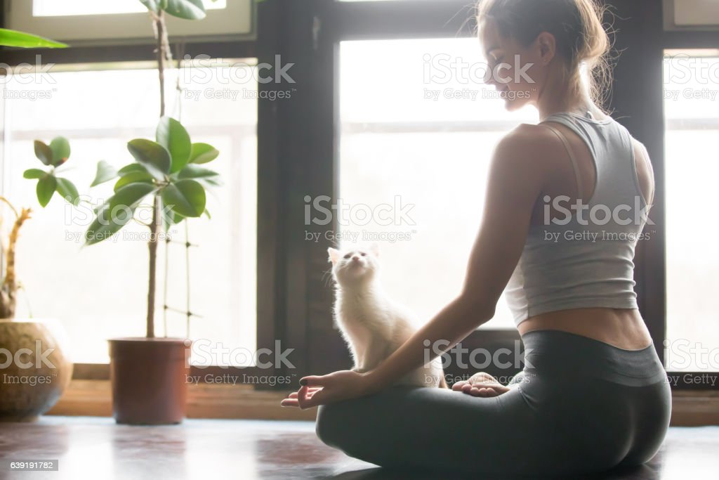 Young woman in Half Lotus pose at home, cat near stock photo