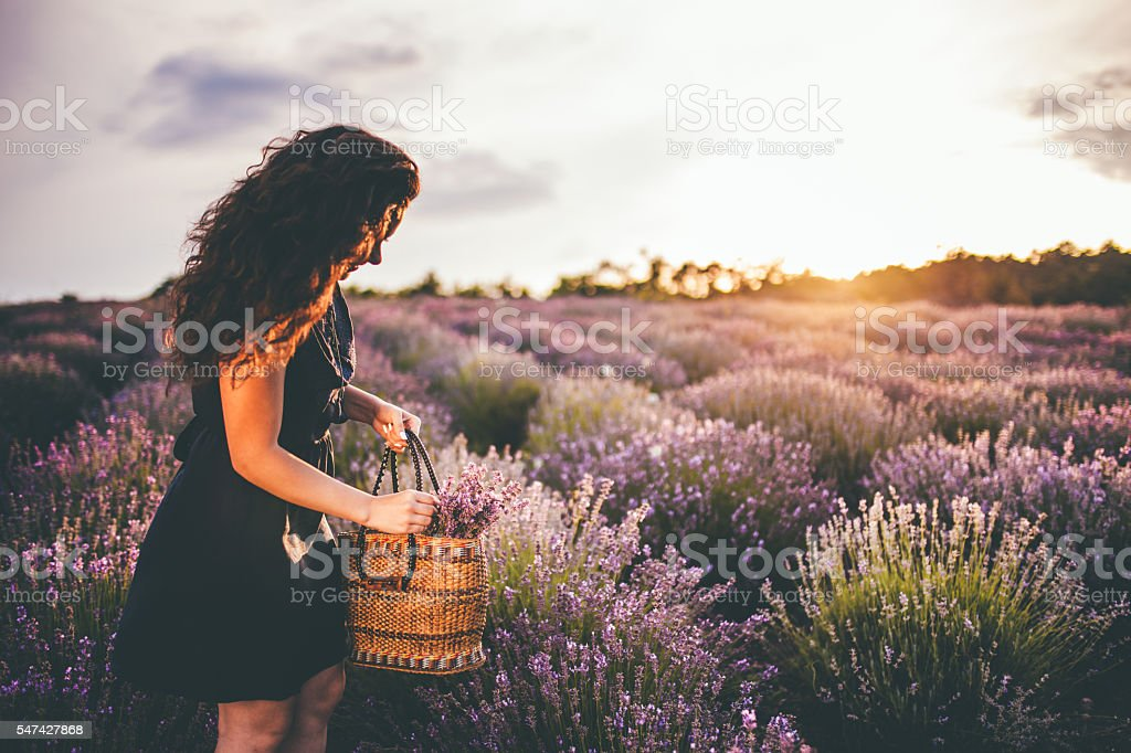 young woman in lavander field stock photo