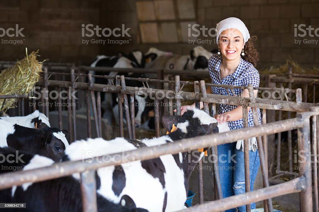 Young woman in the cowshed stock photo