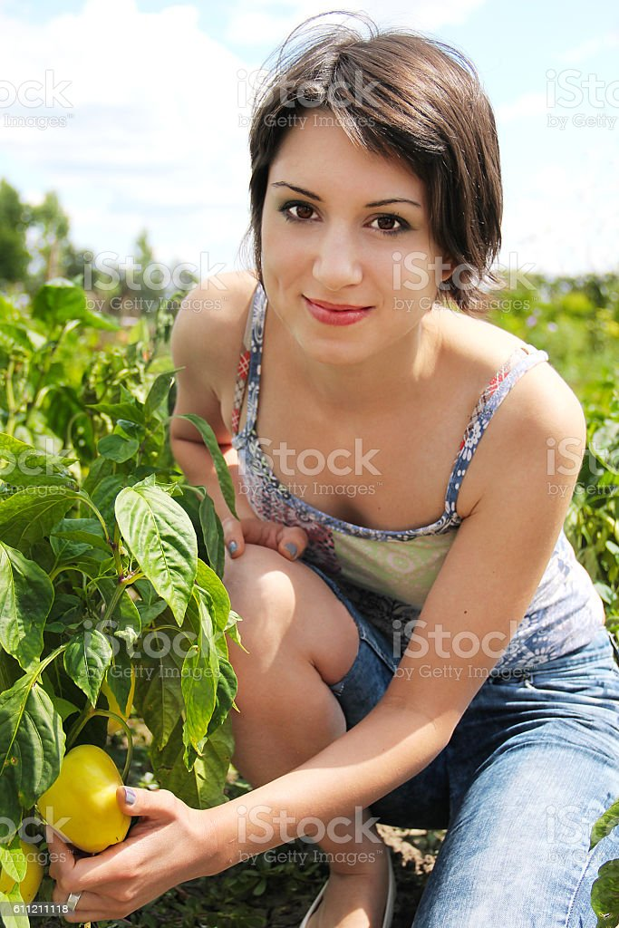 Young woman in the garden picking organic peppers. stock photo