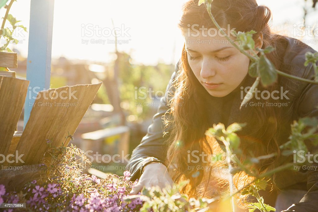 young woman in urban gardening project at raised bed stock photo
