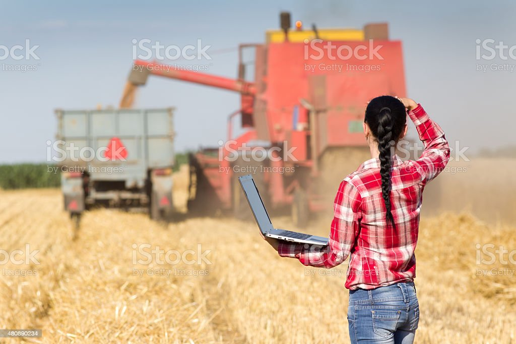 Young woman in wheat field during harvest stock photo