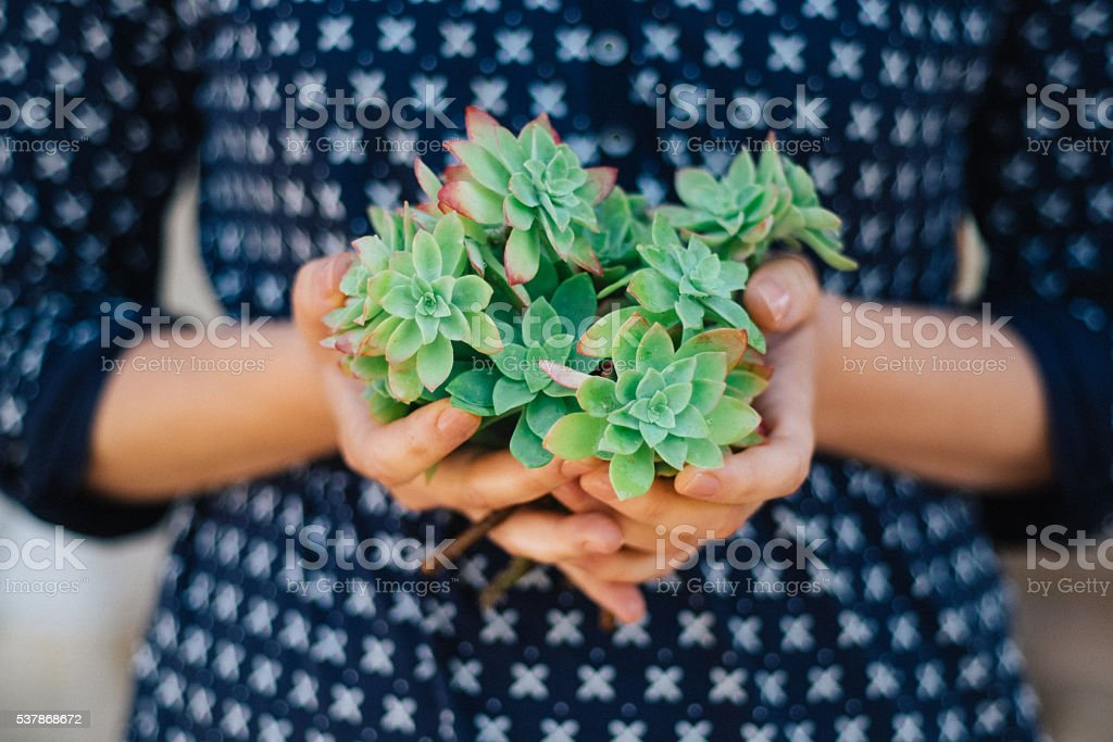 Young woman is holding succulent branches stock photo