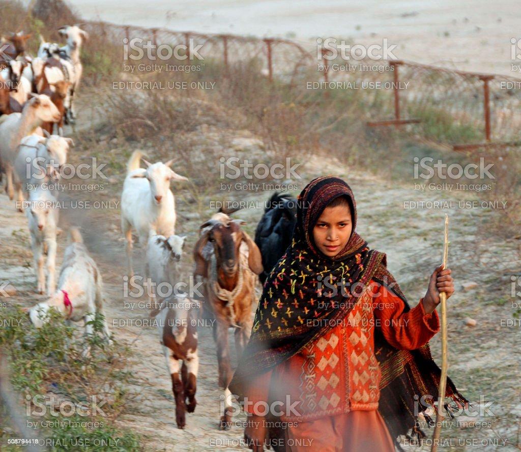 young woman leads goats by Yamuna River stock photo