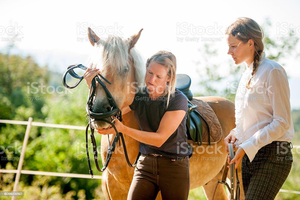 Young Woman Learning to Bridle the Horse stock photo