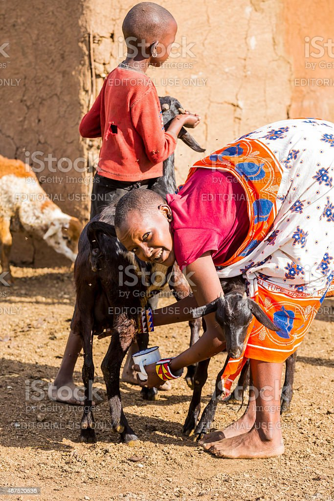 Young woman milking in the old-fashioned way stock photo