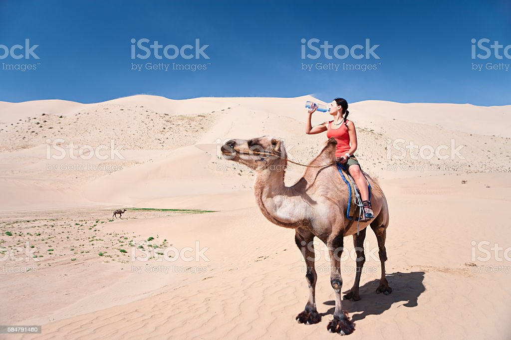 Young woman on camel is drinking water stock photo
