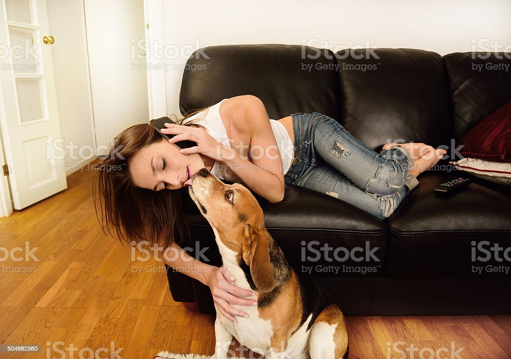 Young woman on phone in sofa, beagle dog stock photo