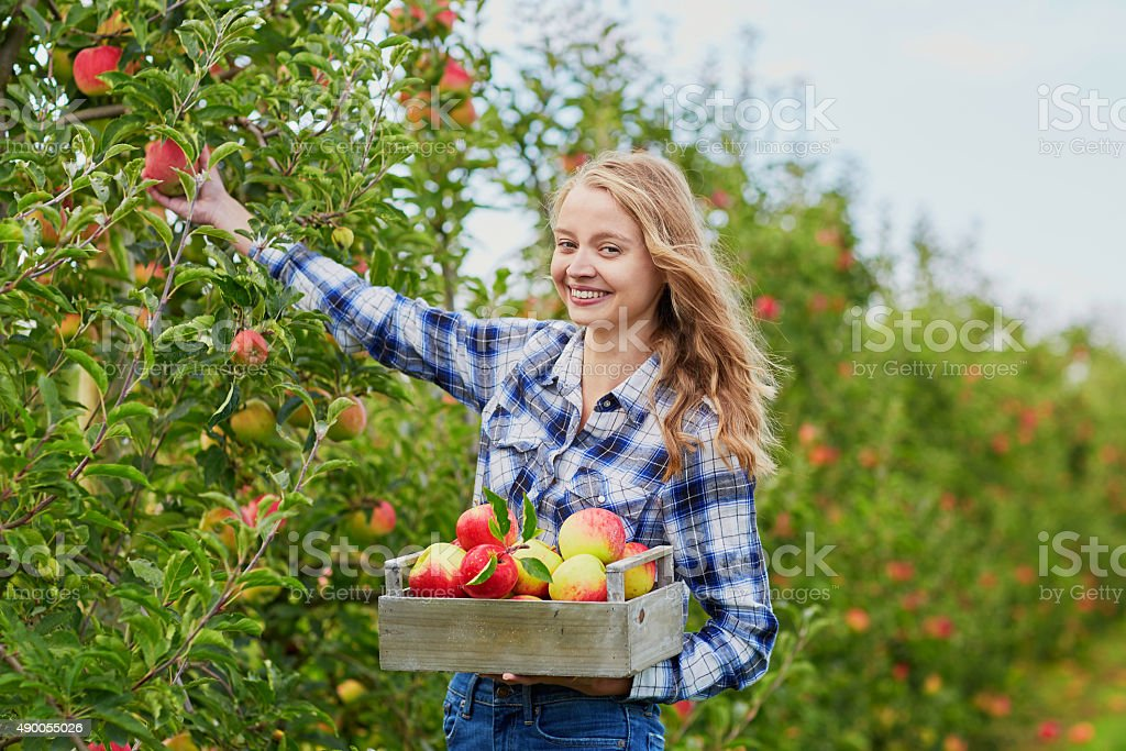 Young woman picking apples in garden stock photo