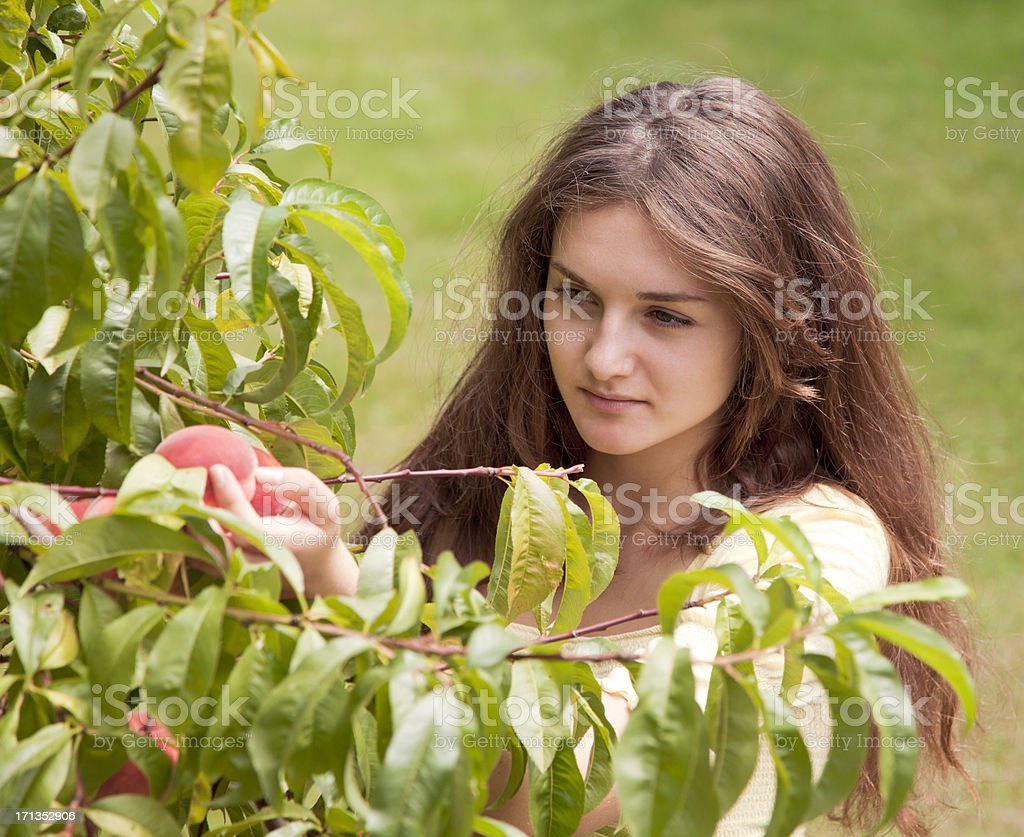 Young woman picking fruit royalty-free stock photo