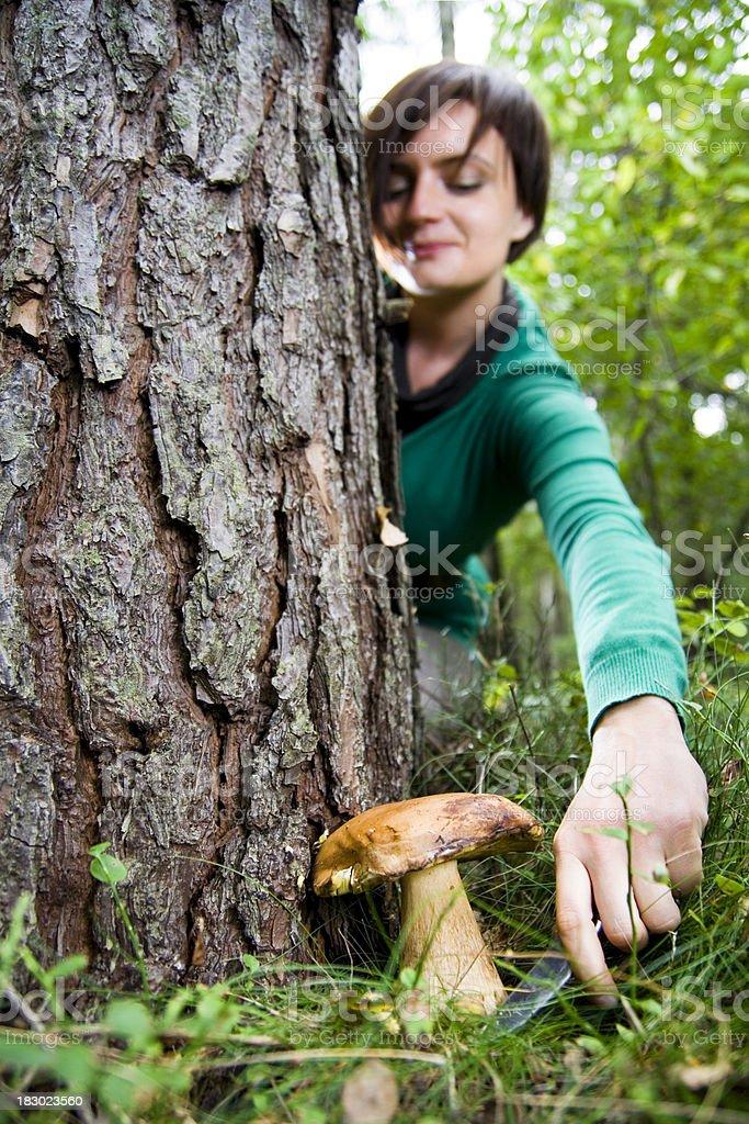 Young woman picking mushrooms royalty-free stock photo