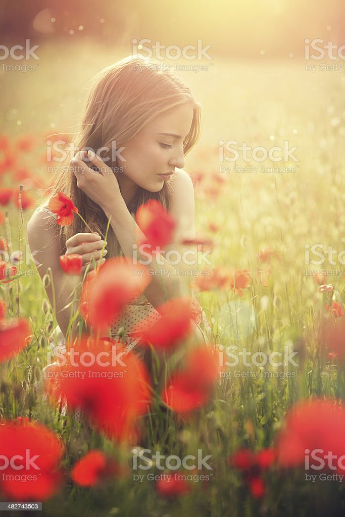 young woman picking poppies stock photo