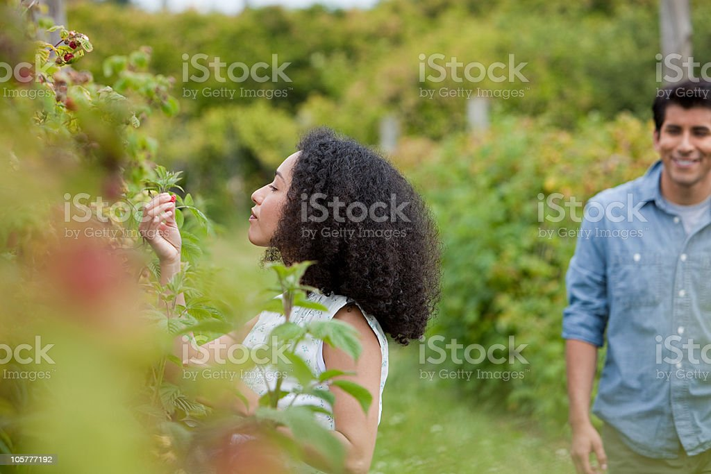 Young woman picking raspberries royalty-free stock photo