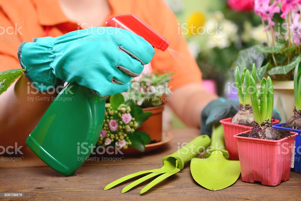young woman planting flowers stock photo