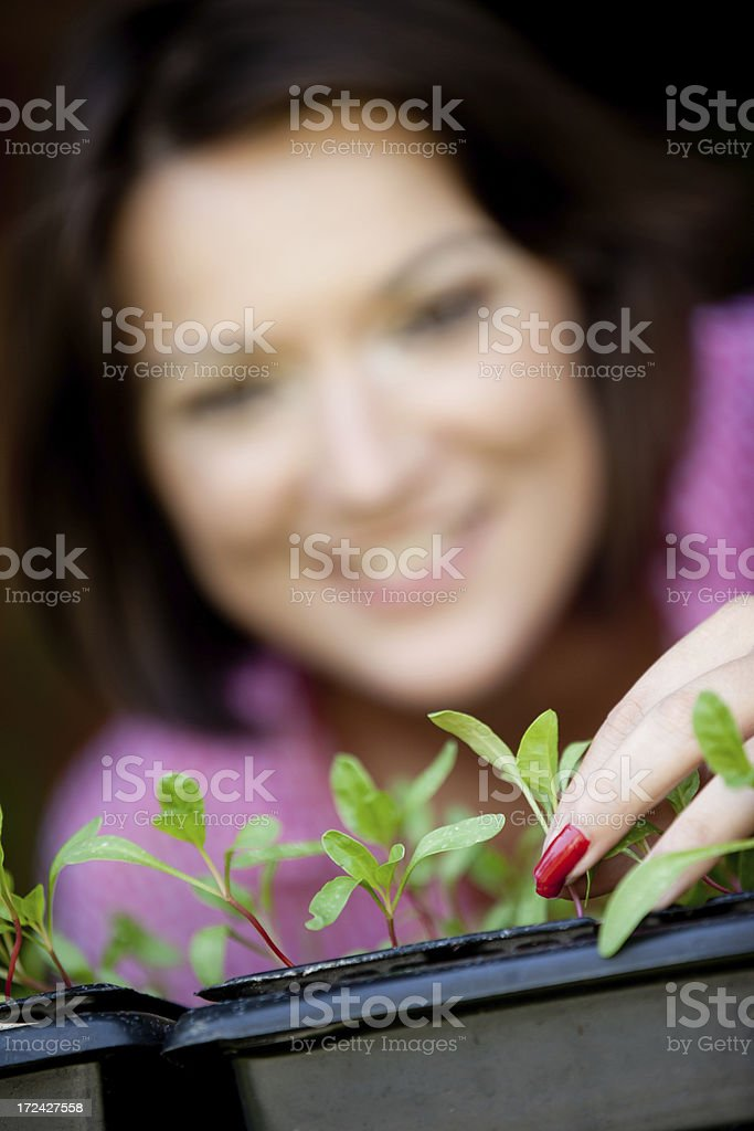 Young woman planting vegetables royalty-free stock photo