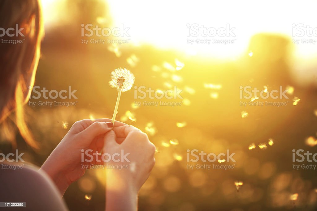 Young woman playfully blowing a dandelion stock photo
