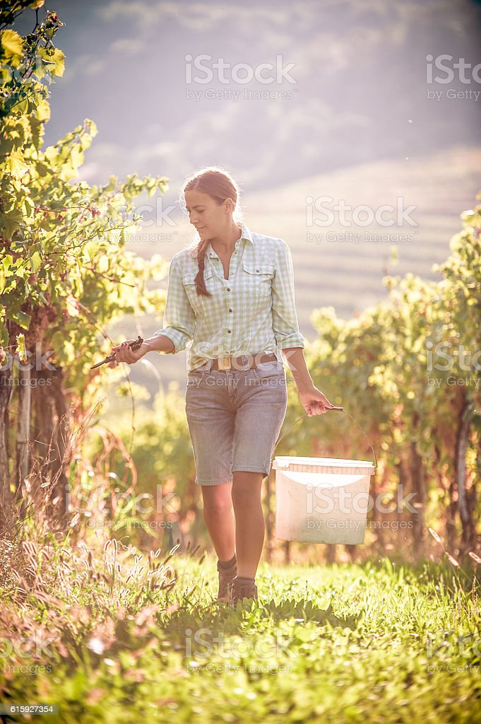Young woman portrait in the Vineyard stock photo