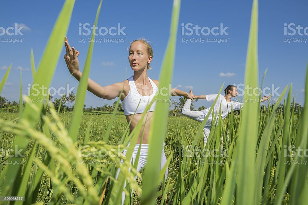 Young woman practicing yoga in a rice field royalty-free stock photo